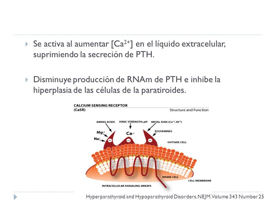 Se activa al aumentar [Ca2+] en el líquido extracelular, suprimiendo la secreción de PTH.